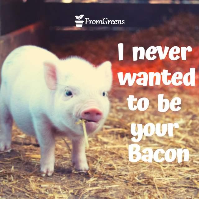 Pig Quotes thumbnail