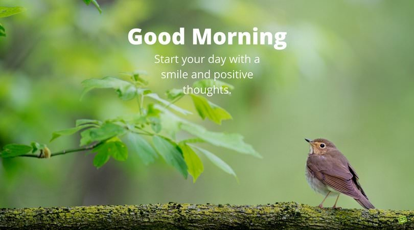 Positive Quotes Of Good Morning Pinterest thumbnail