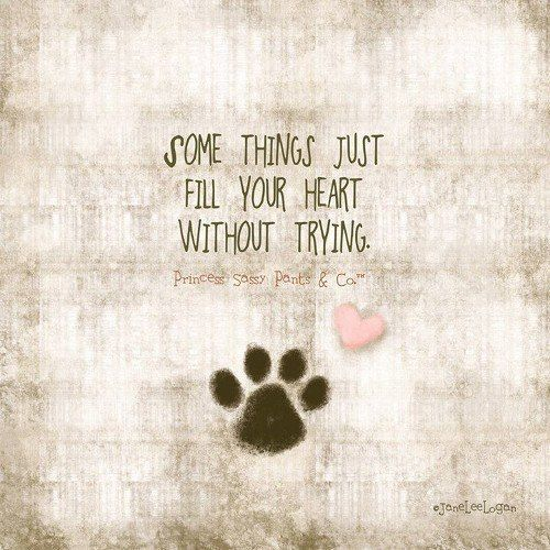 Puppy Love Quotes Tumblr thumbnail