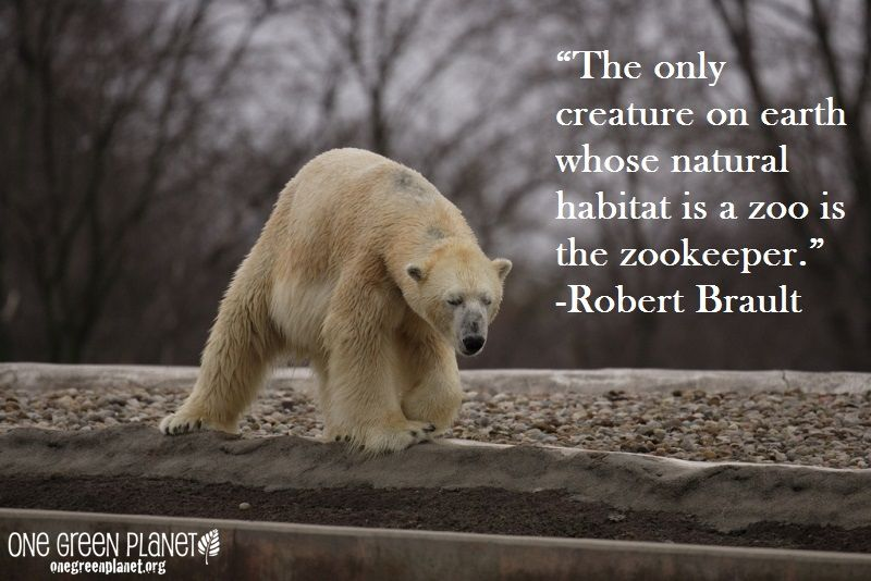 Quotes About Animals In Captivity Facebook thumbnail