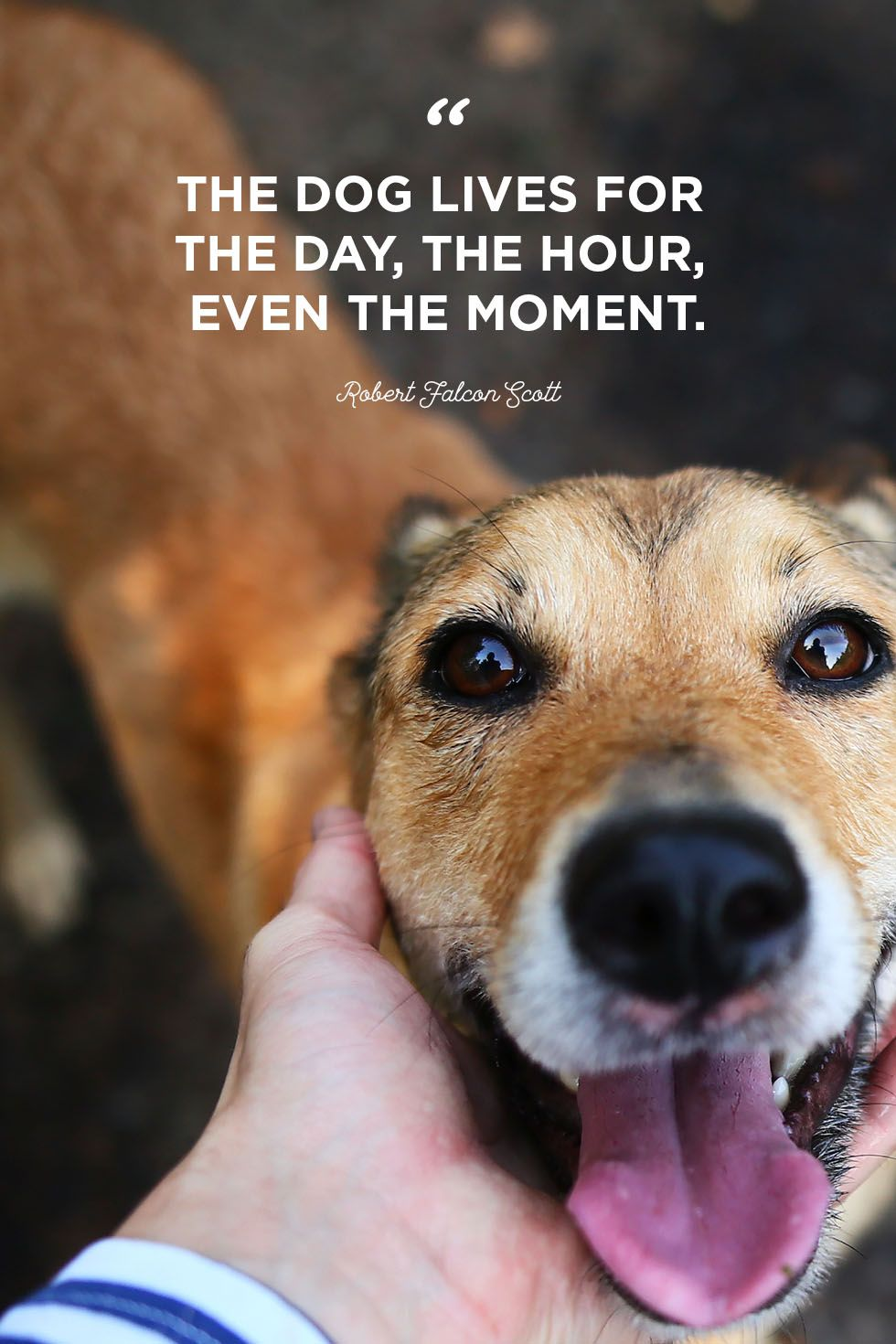 Quotes About Dogs And Owners Tumblr thumbnail