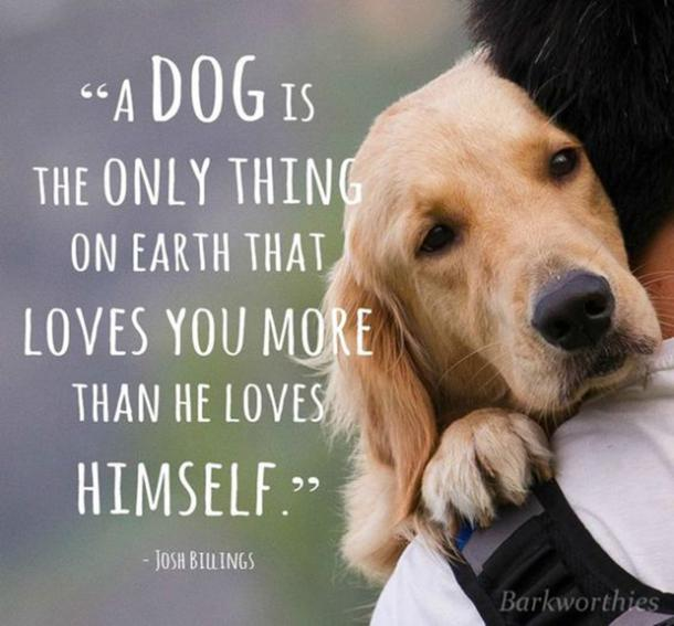 Quotes About Dogs Being Your Best Friend Pinterest thumbnail