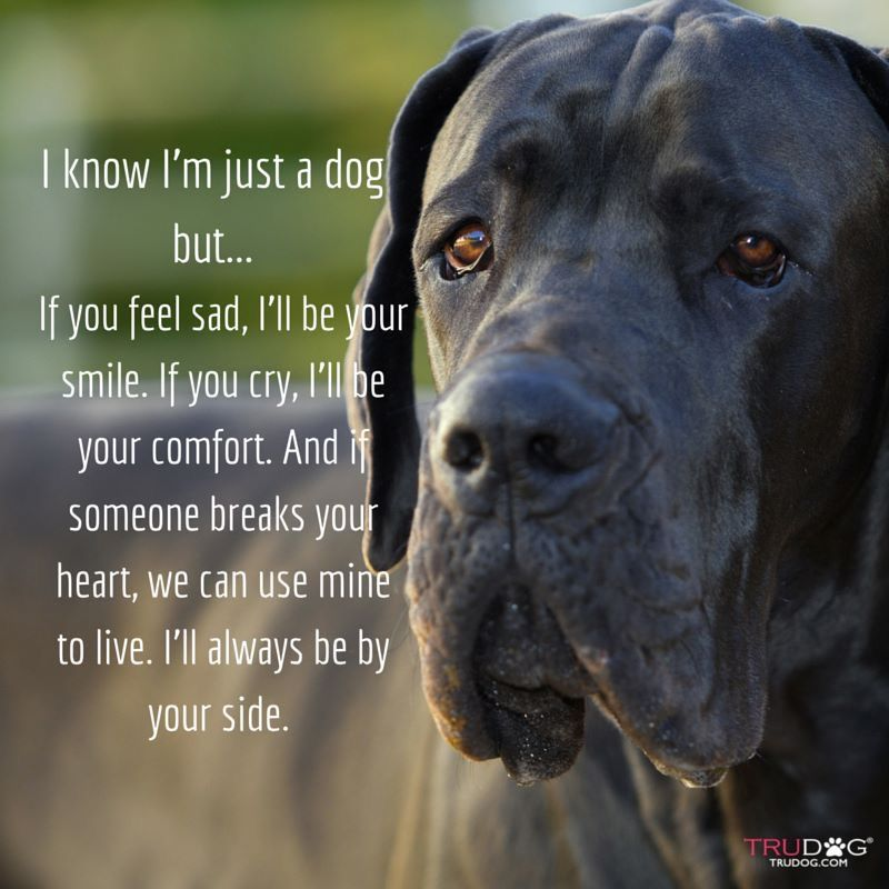 Quotes About My Dog As Best Friend Twitter thumbnail