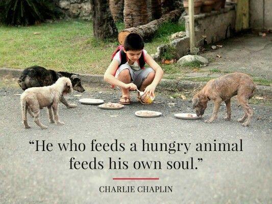 Quotes On Stray Animals Pinterest thumbnail