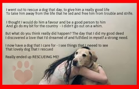 Rescue Dog Sayings Twitter thumbnail