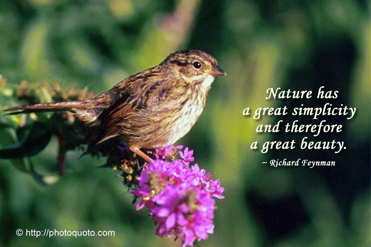 Sayings About Nature Beauty Twitter thumbnail
