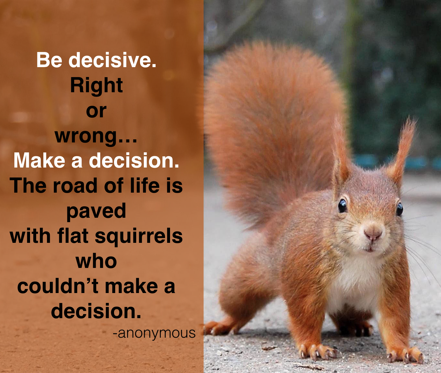 Squirrel Quotes Tumblr thumbnail