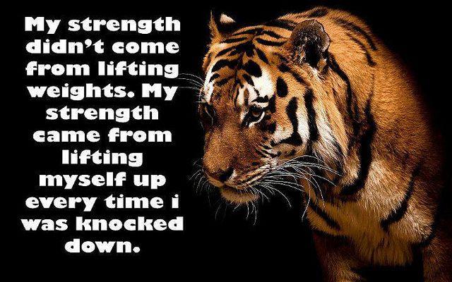 Tiger Animal Quotes thumbnail
