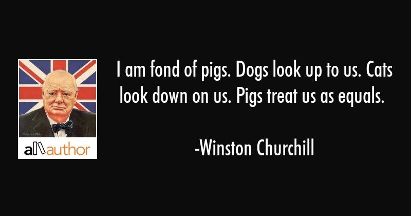 Winston Churchill Pigs Pinterest thumbnail